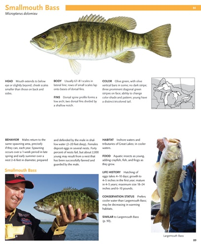 essays on aquatic safety