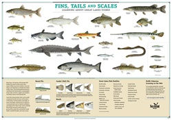Fins, Tails and Scales Poster